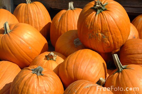 09_21_2---Pumpkins_web